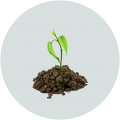 Soil and Fertilizer